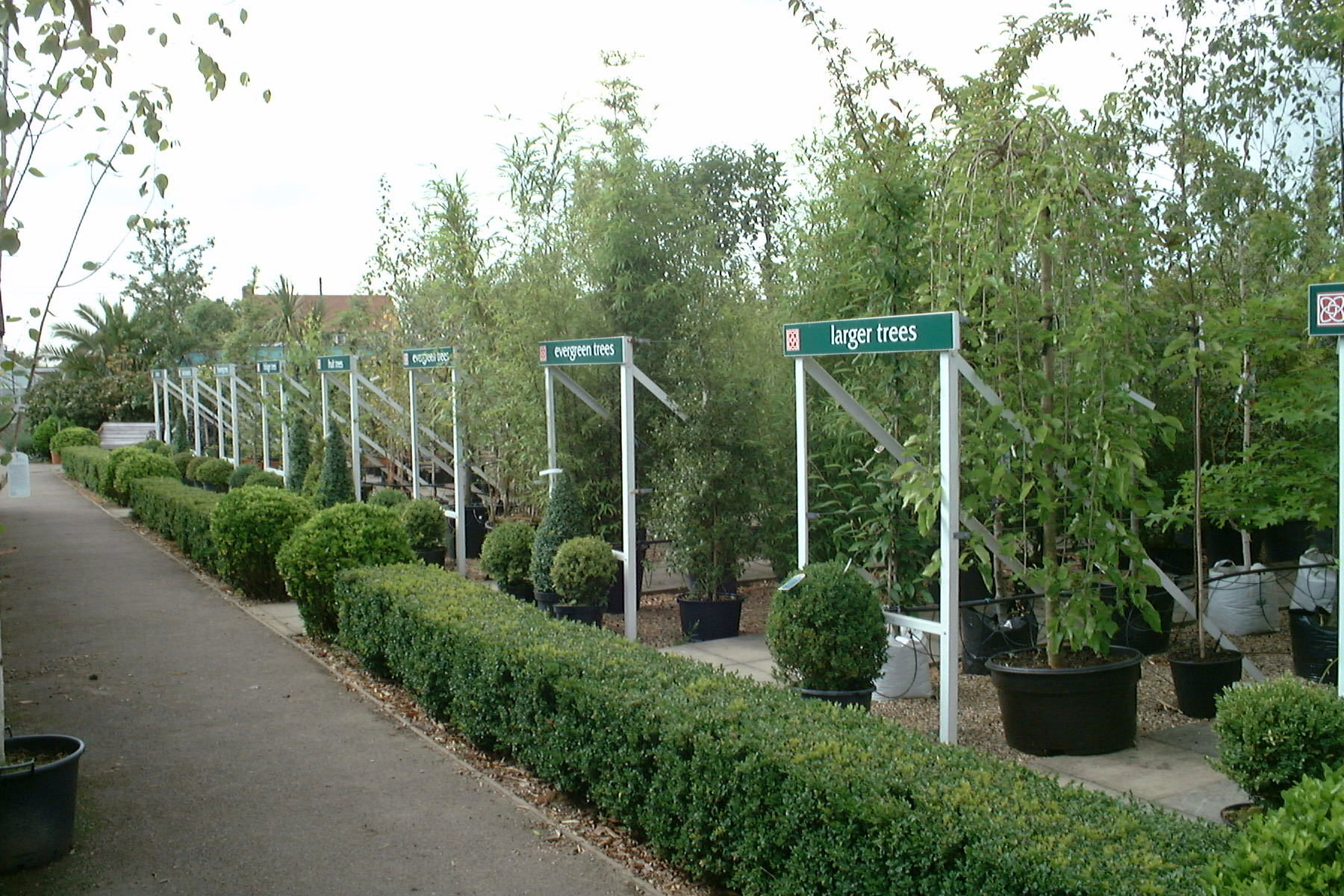 The evergreen tree display at Preston Garden Centre